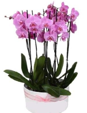 Beyaz seramik içerisinde 7 dallı mor orkide  Kıbrıs çiçek , çiçekçi , çiçekçilik