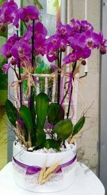Seramik vazoda 4 dallı mor lila orkide  Kıbrıs cicekciler , cicek siparisi