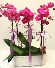 Beyaz seramik içerisinde 4 dallı orkide  Kıbrıs çiçekçi mağazası