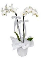 2 dallı beyaz orkide  Kıbrıs online çiçekçi , çiçek siparişi