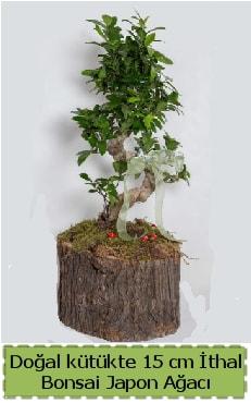 Doğal kütükte İthal bonsai japon ağacı  Kıbrıs çiçek satışı