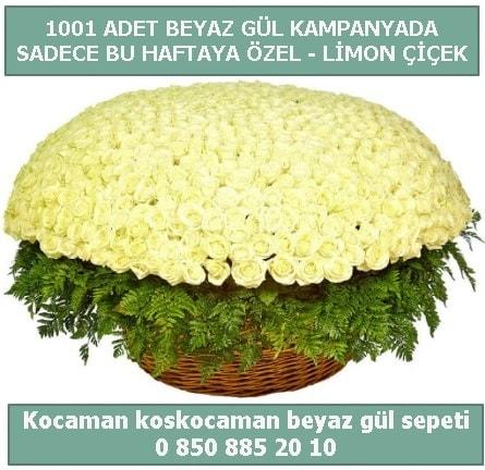 1001 adet beyaz gül sepeti özel kampanyada  Kıbrıs çiçek gönderme