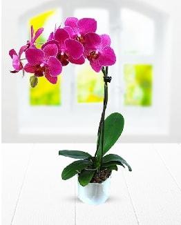 Tek dallı mor orkide  Kıbrıs ucuz çiçek gönder