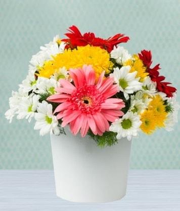 Seramik Vazoda Gelbera ve Papatya  Kıbrıs çiçek satışı