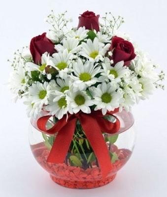 Fanusta 3 Gül ve Papatya  Kıbrıs internetten çiçek siparişi