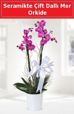 Seramikte Çift Dallı Mor Orkide  Kıbrıs çiçek online çiçek siparişi