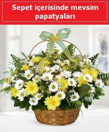 Sepet içerisinde mevsim papatyaları  Kıbrıs çiçekçi mağazası