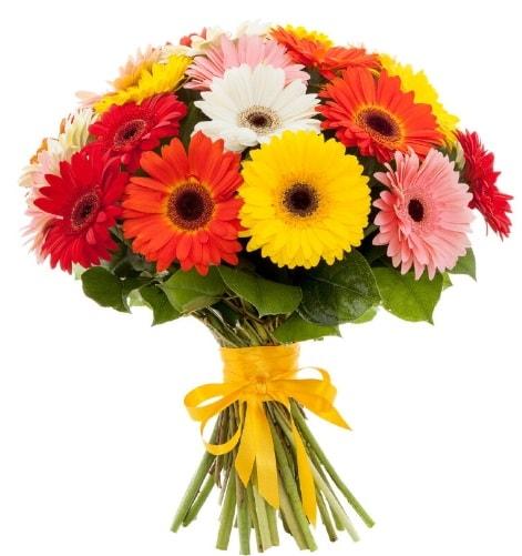 Gerbera demeti buketi  Kıbrıs ucuz çiçek gönder