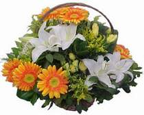 Kıbrıs İnternetten çiçek siparişi  sepet modeli Gerbera kazablanka sepet
